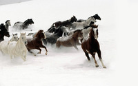 Snow Horses wallpaper 1920x1200 jpg