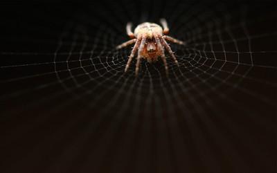 Spider [3] wallpaper
