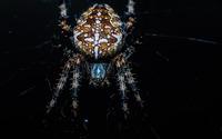 Spider [7] wallpaper 1920x1200 jpg