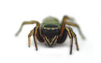 Spider [8] wallpaper 1920x1200 jpg