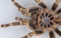 Spider close-up wallpaper 2880x1800 jpg