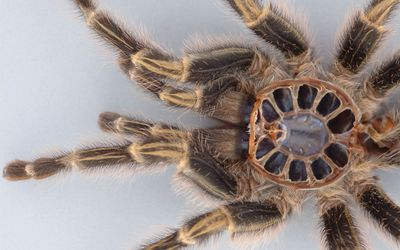 Spider close-up wallpaper