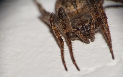 Spider close-up [2] wallpaper