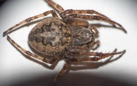 Spider on a white wall wallpaper 2560x1600 jpg