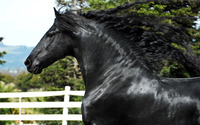 Splendid black horse wallpaper 2560x1600 jpg