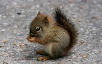 Squirrel wallpaper 2560x1600 jpg