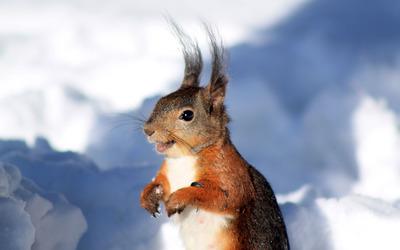 Squirrel [7] wallpaper
