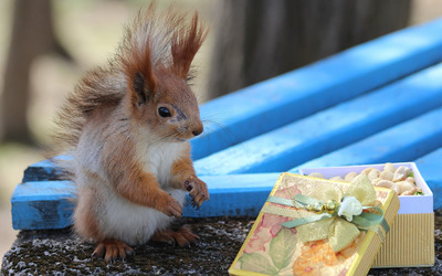 Squirrel [8] wallpaper