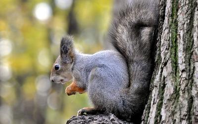 Squirrel [14] wallpaper