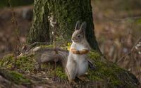 Squirrel [12] wallpaper 2560x1600 jpg