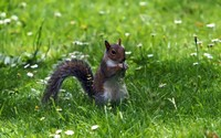 Squirrel [15] wallpaper 2560x1600 jpg