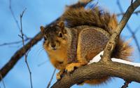 Squirrel [3] wallpaper 2560x1600 jpg