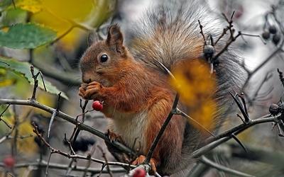 Squirrel eating [2] wallpaper