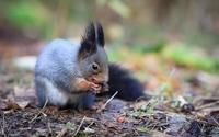 Squirrel eating [4] wallpaper 1920x1200 jpg