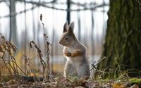 Squirrel standing wallpaper 2560x1600 jpg