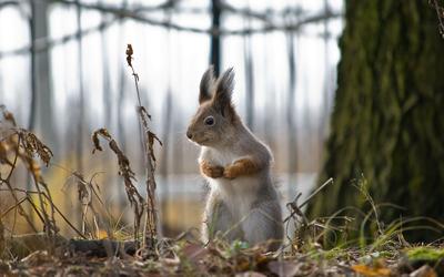 Squirrel standing wallpaper