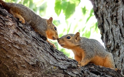 Squirrels on a branch wallpaper