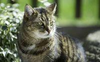Staring cat [3] wallpaper 2560x1600 jpg