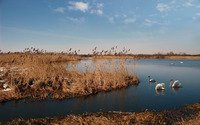 Swans in the water wallpaper 2880x1800 jpg