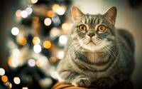 Tabby cat by the Christmas tree wallpaper 2560x1600 jpg
