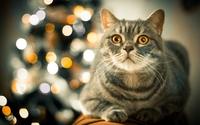 Tabby cat by the Christmas tree wallpaper 2560x1600 jpg