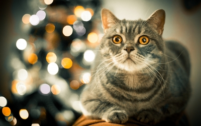 Tabby cat by the Christmas tree wallpaper