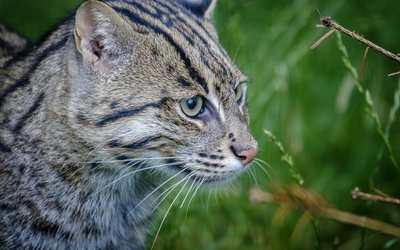 Tabby cat in the grass wallpaper