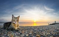 Tabby cat on the rocky shore wallpaper 2560x1600 jpg
