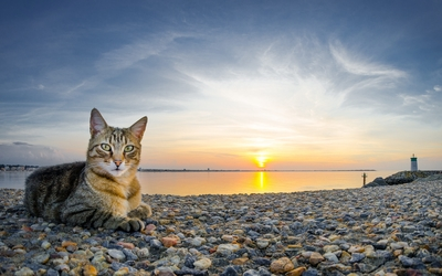 Tabby cat on the rocky shore wallpaper