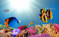 Tropical fish wallpaper 1920x1200 jpg
