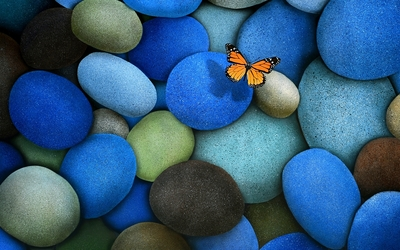 Viceroy butterfly on blue pebbles wallpaper