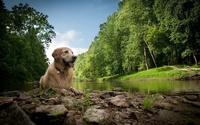 Wet dog resting by the river wallpaper 2560x1600 jpg
