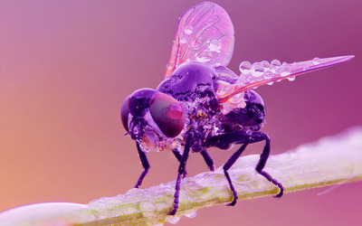 Wet fly wallpaper