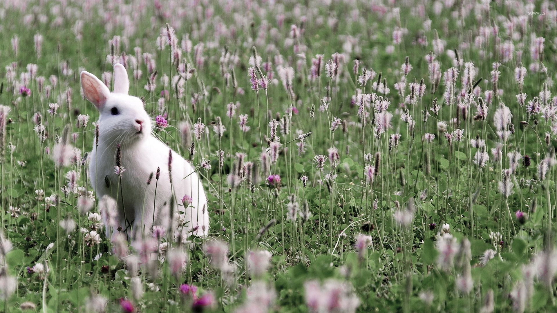 Pink rabbit tornado wallpaper Digital Art wallpapers