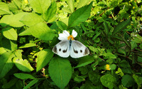 White butterfly wallpaper 2880x1800 jpg