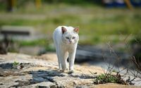 White cat [2] wallpaper 1920x1200 jpg