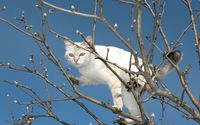 White cat in a tree wallpaper 1920x1200 jpg