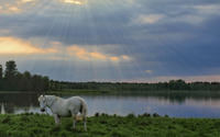 White horse wallpaper 3840x2160 jpg