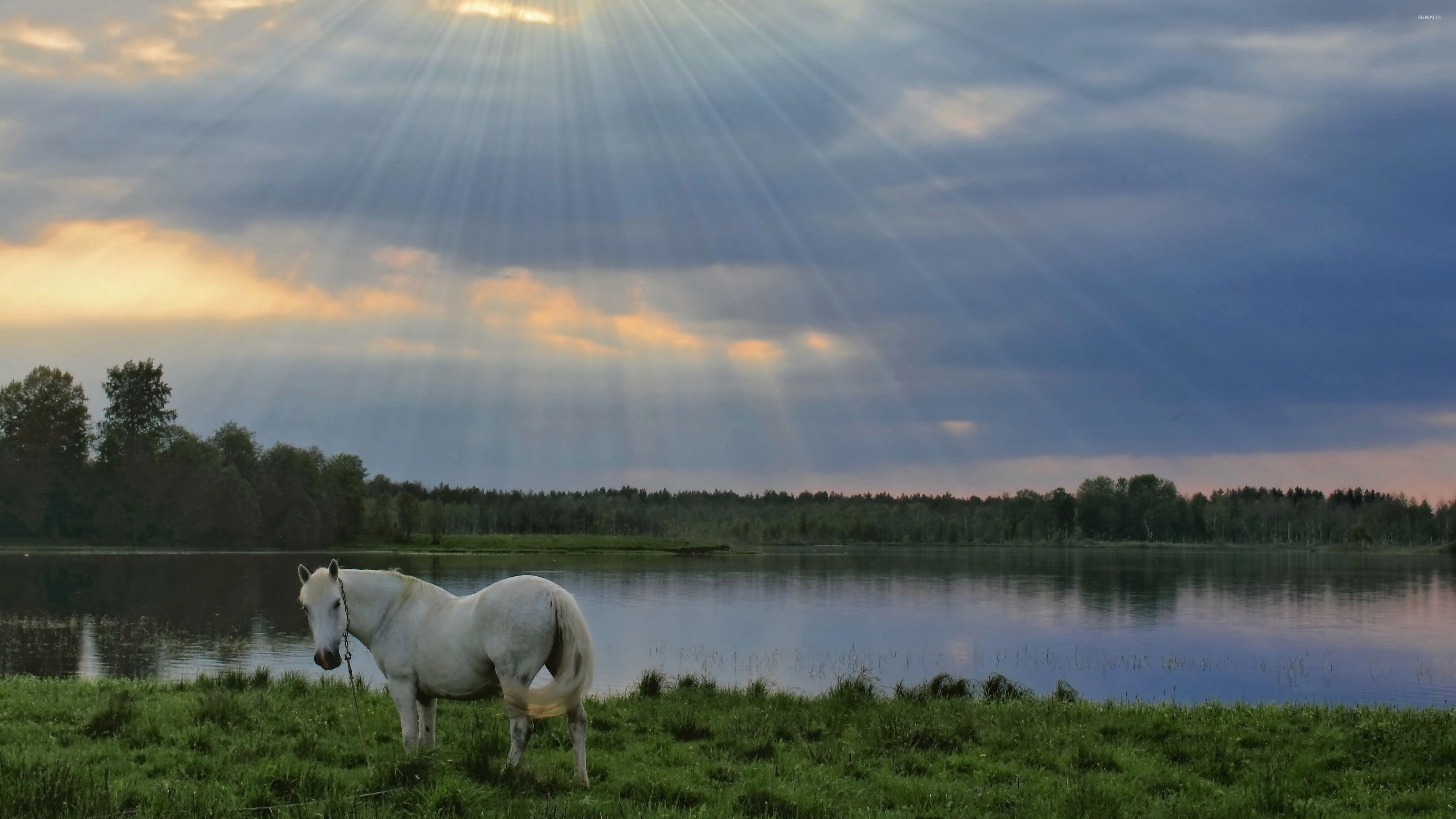 White Horse Wallpaper Animal Wallpapers 39016