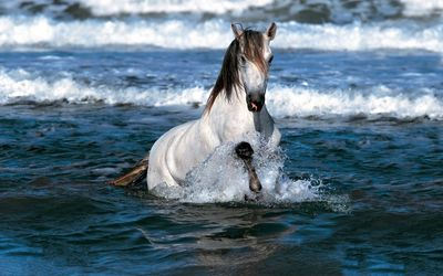 White horse running in the ocean wallpaper