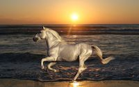 White horse running on the beach wallpaper 1920x1080 jpg