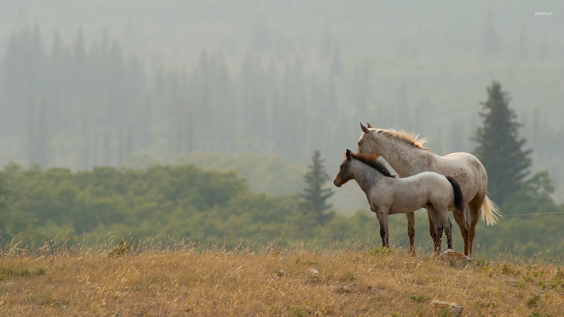 best HorsesRocky Mountain Horses images on Pinterest