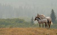 White horses wallpaper 1920x1080 jpg