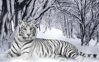 White Tiger wallpaper 1920x1080 jpg