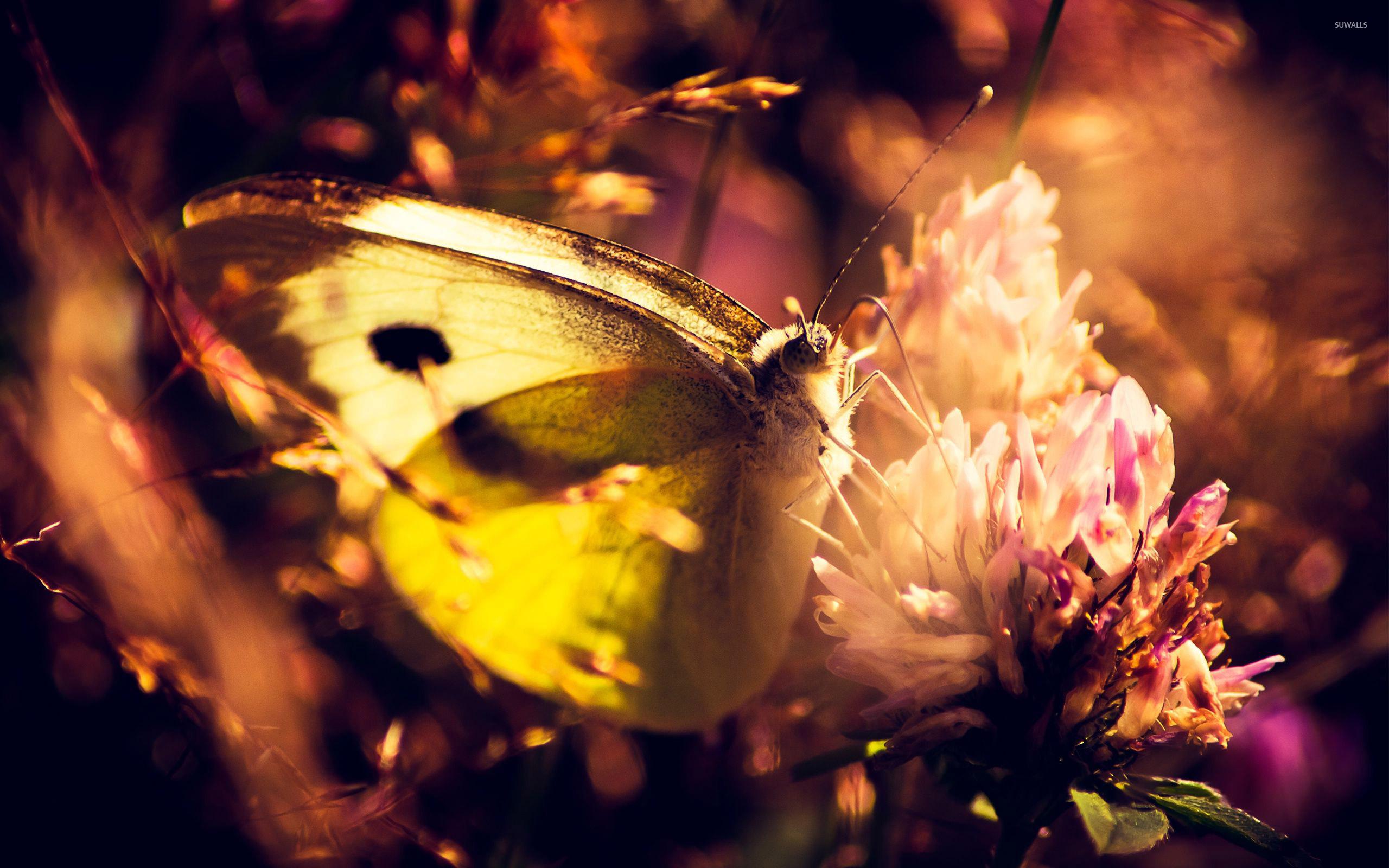 Бабочка закат трава бесплатно