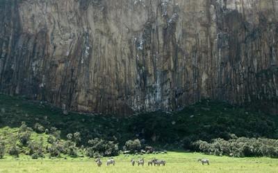 Zebras in Hell's Gate National Park, Kenya wallpaper