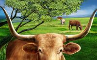 Bulls on the field wallpaper 1920x1200 jpg