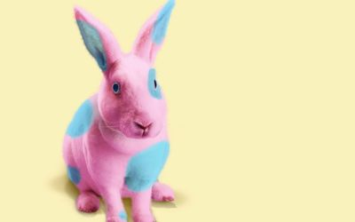 Bunny painted in pink and blue wallpaper