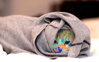 Cat hiding under a blanket wallpaper