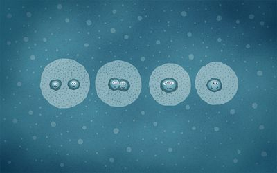 Cell division [2] wallpaper